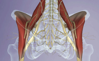Thinking Practitioner Podcast, Ep 25: Psoas Work: Is it Safe? Is it Necessary?