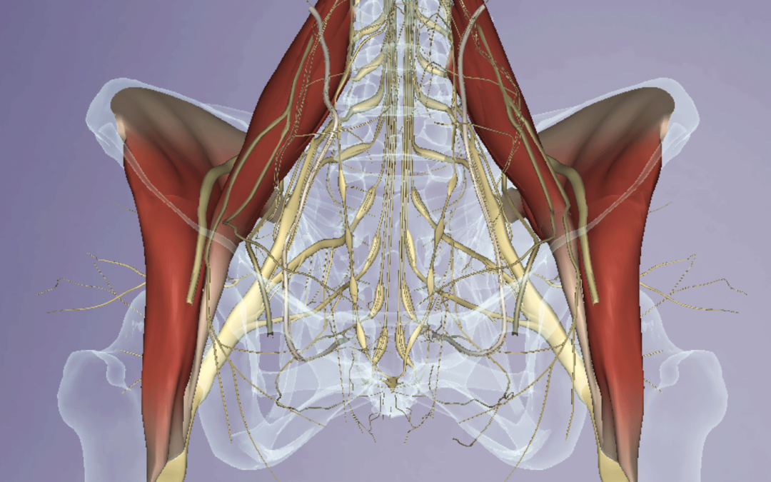 Thinking Practitioner Podcast, Ep 48: Psoas Work: Is it Safe? Is it Necessary? (Rebroadcast)